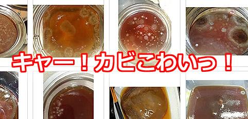 紅茶キノコカビ