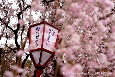 弘前公園の桜@青森県弘前市