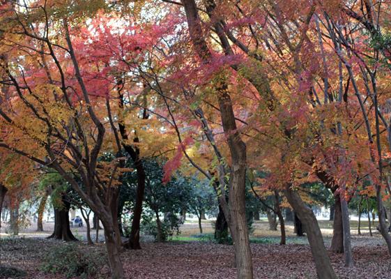 光が丘の紅葉