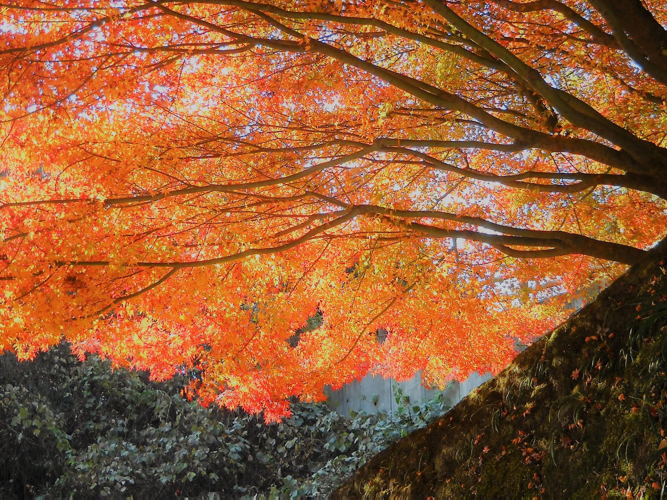 紅葉 健康の森公園