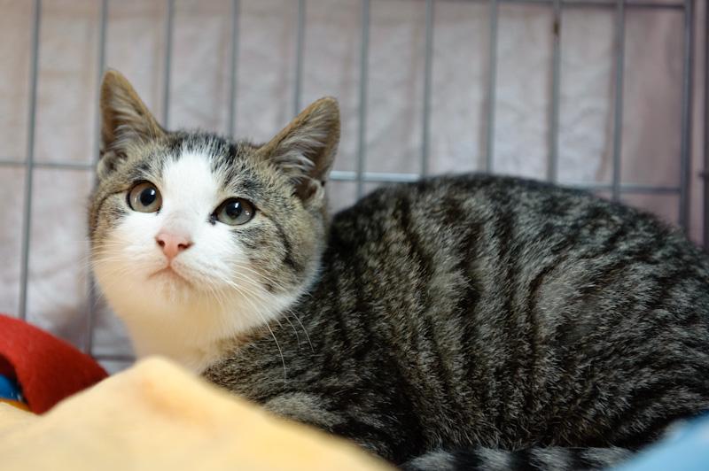 kitty091108-1.jpg