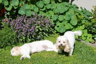dogs11_20161028095447fd2.jpg