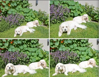 dogs4_201610280954131a0.jpg