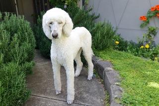 dogs5_20161028095414876.jpg