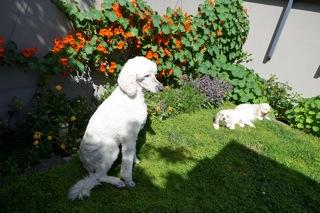dogs6_20161028095427237.jpg
