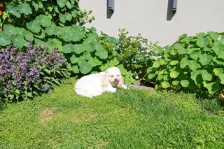 dogs_201610280954086ab.jpg