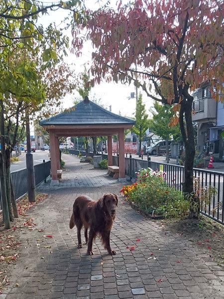 20161111お散歩催促