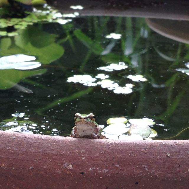 Frog_0830_1.jpg