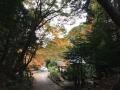 日向大神宮10