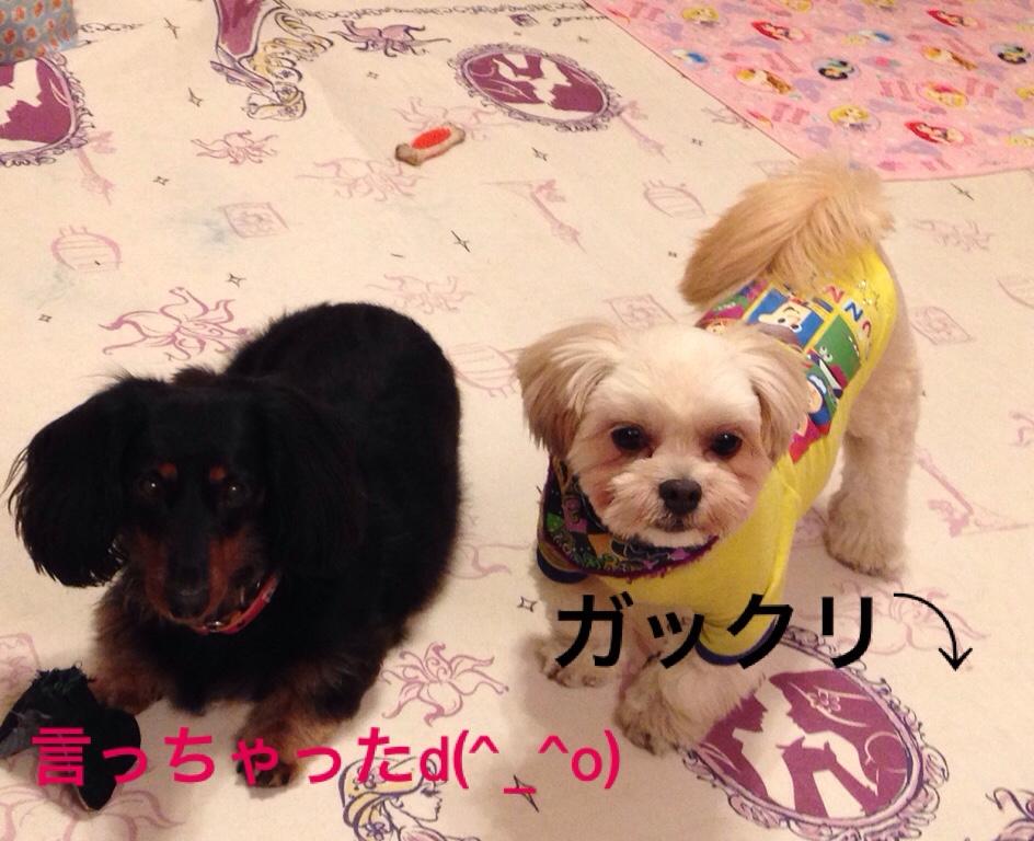 fc2blog_20161102222741700.jpg