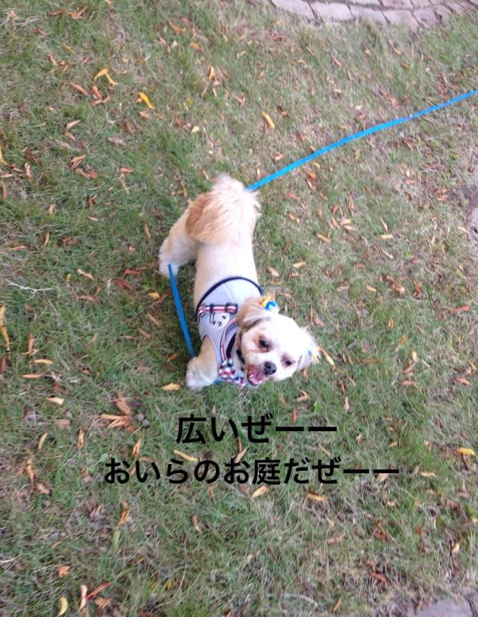 fc2blog_20161116231723a19.jpg