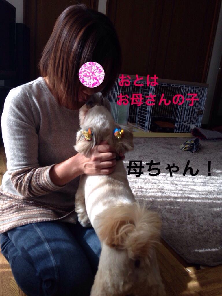fc2blog_20161118210050fed.jpg