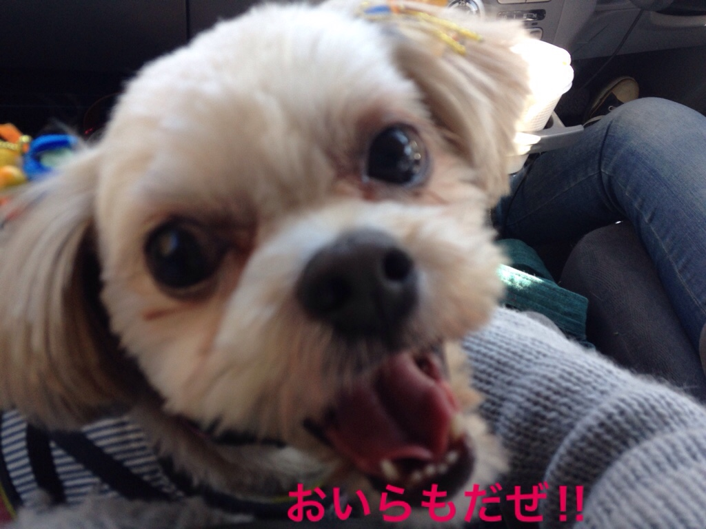 fc2blog_20161118210740fb4.jpg