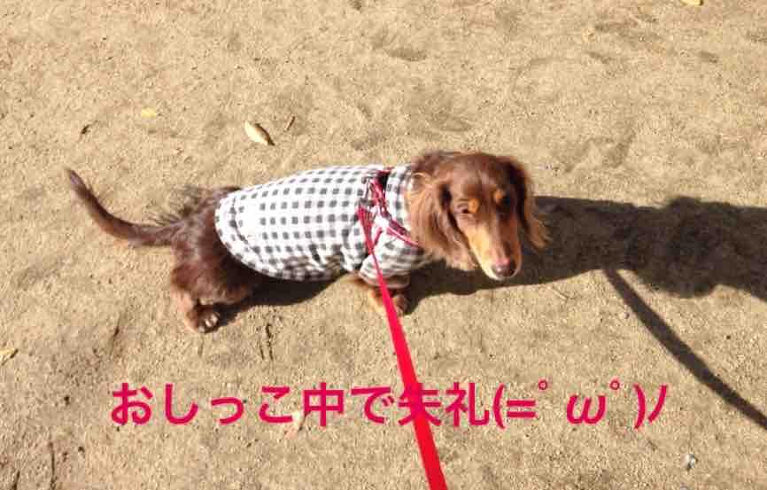 fc2blog_20161228005717818.jpg