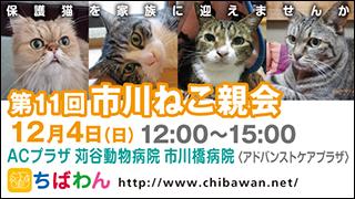 ichikawaneko11_320x180市川