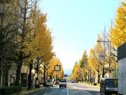 16-11-25 銀杏