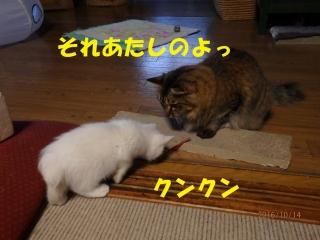 blog161015_7.jpg