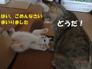 blog161020_1.jpg