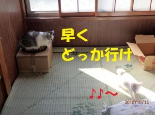 blog161020_2.jpg