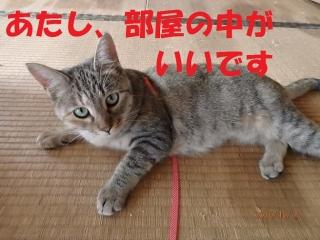 blog161020_3.jpg
