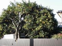 枝いっぱい(2)
