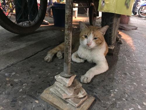 201611Rotee_stall_Chiangmai-8.jpg