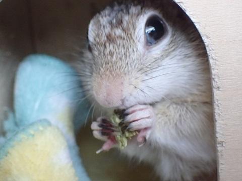 ソニアちゃん、牧草おやつを食べる