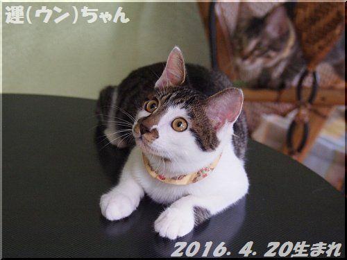2016100401.jpg