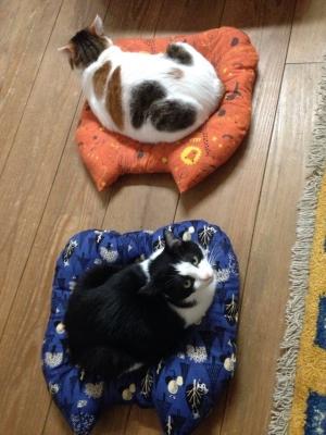 猫型 座布団 使用例