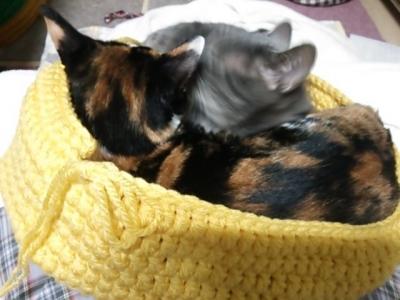 手編み ベッド 猫 邪魔をする