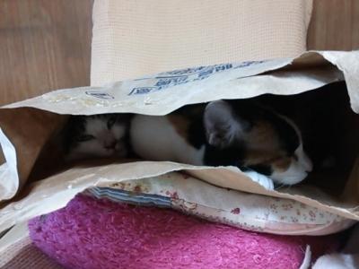 袋の中の猫 2匹