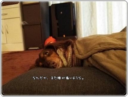 IMG_2432.jpg