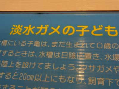 syukusyo-RIMG0139_20160730181708fc0.jpg