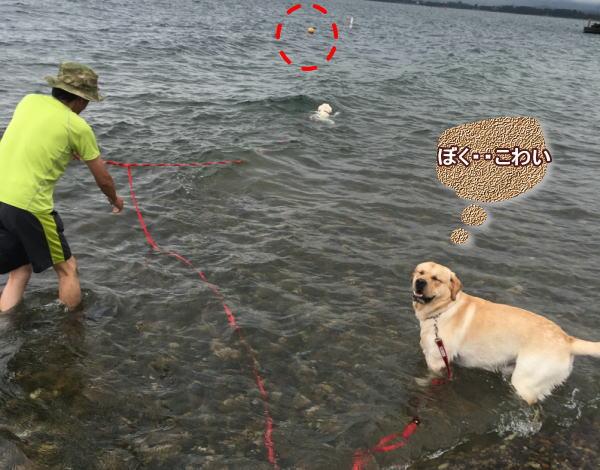 h琵琶湖4