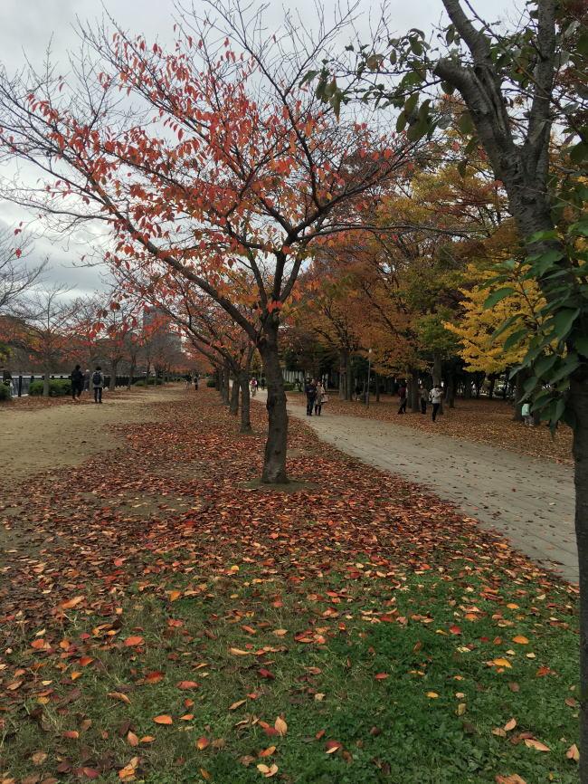 h大阪城公園3