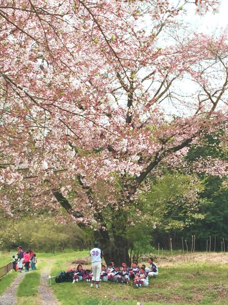 桜の下で…