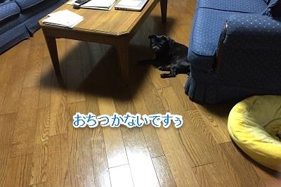 2016-5-29-1.jpg