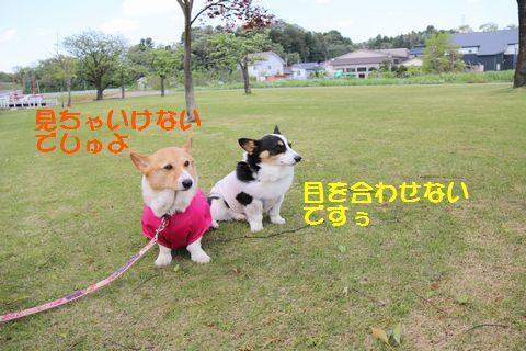IMG_3447.jpg