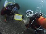 アオリイカの産卵とヘッドワースト潜降 (20)