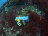 水中タイムラプス (1)