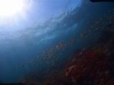 伊豆海洋公園 (17)