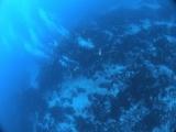 西川名ダイビング市川ダイビングカレントブルー (12)