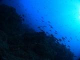 雲見沖の根 (8)