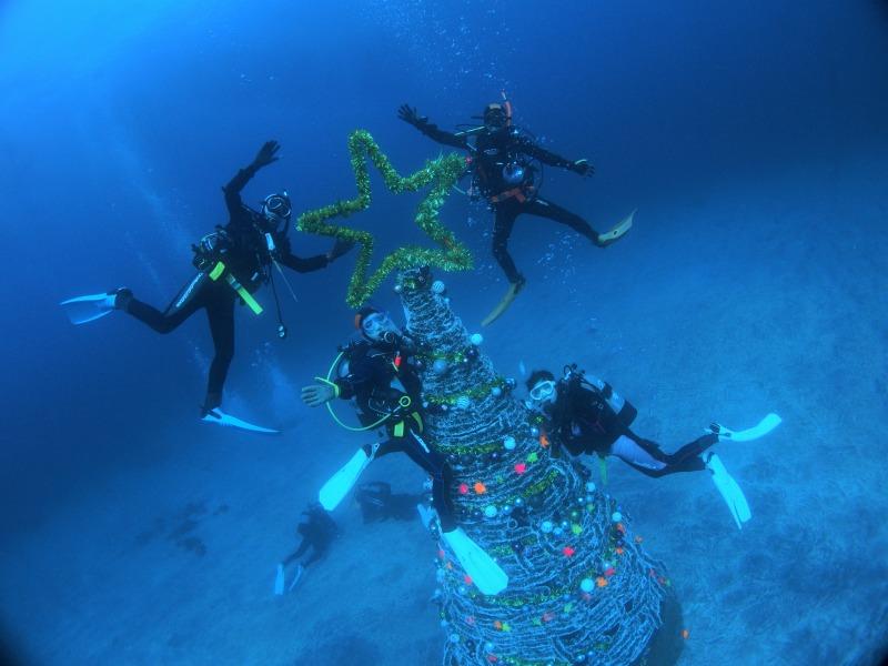 伊豆海洋公園クリスマスツリー