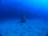 伊豆海洋公園 (1)