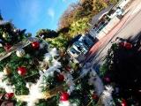 伊豆海洋公園ダイビングクリスマス (2)