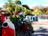 伊豆海洋公園ダイビングクリスマス (3)