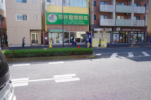 IMGP2715.jpg