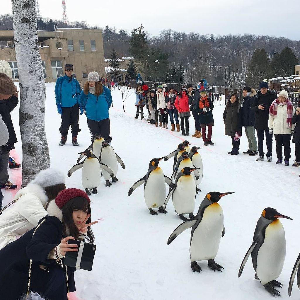 ペンギンと写る愛理ちゃん