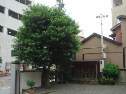 平成28年10月の境内の樹木